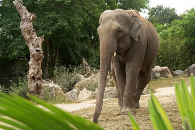 Parc Zoologique de Pont-Scorff