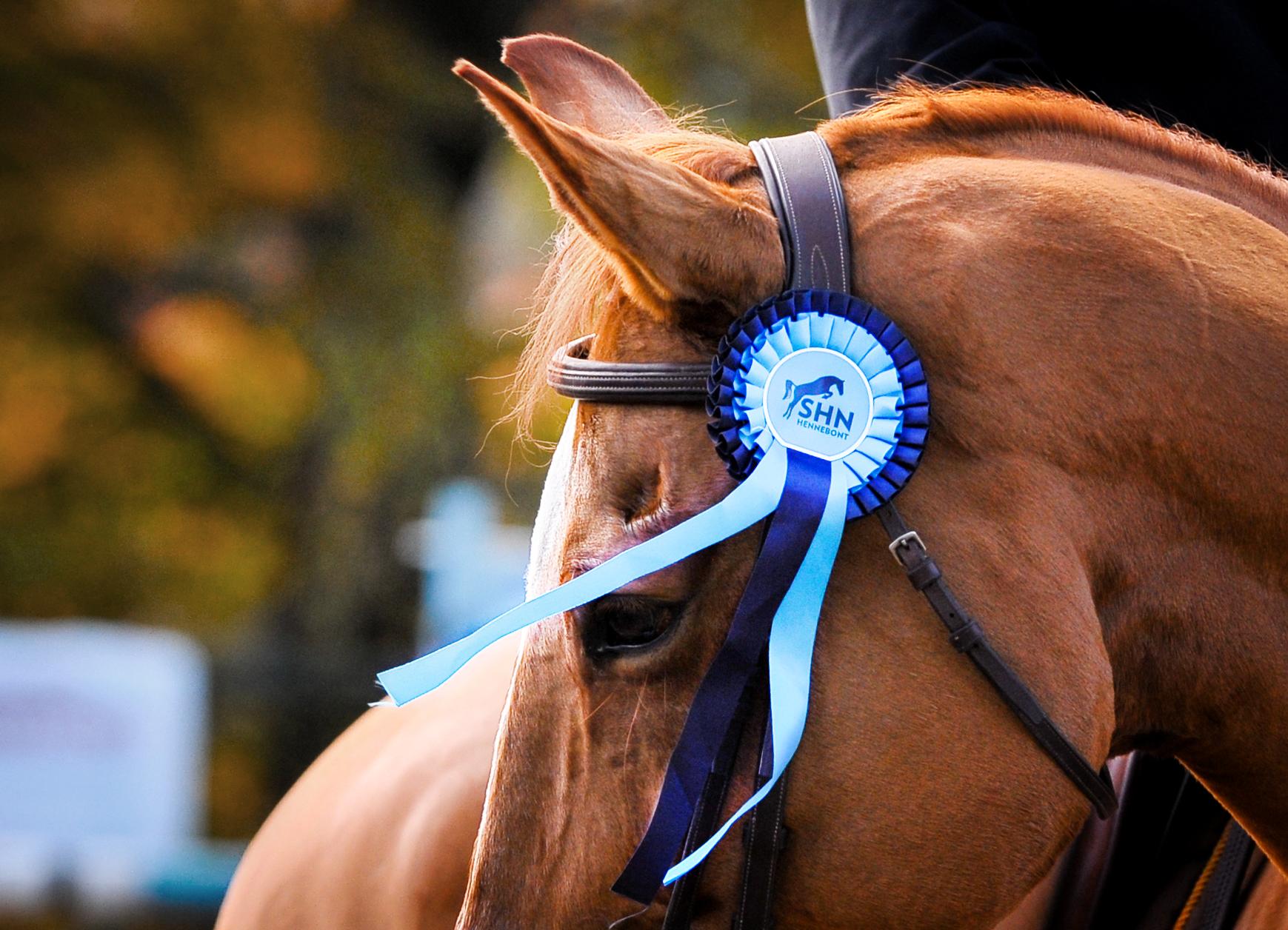 loisir equestre Morbihan ; loisirs Bretagne sud ; Groix