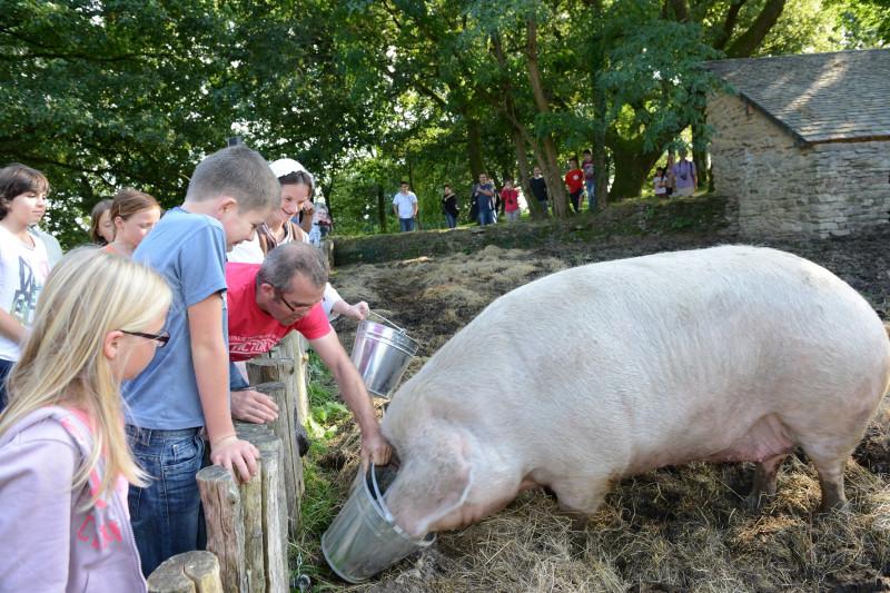 copie-de-cochon-nourrissage-michel-jamoneau-village-de-poul-fetan-199-57109